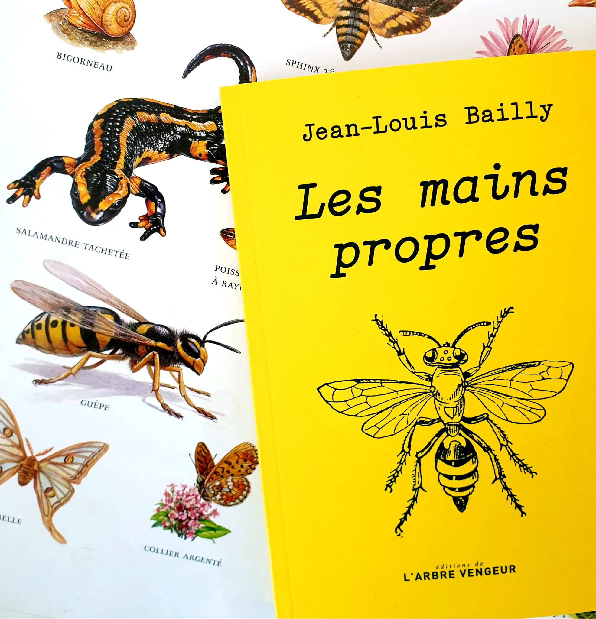 les mains propres, Jean-Louis Bailly